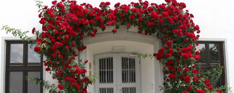 rosenbogen.jpg