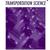 Dezember 2016: Veröffentlichung in der Zeitschrift Transportation Science
