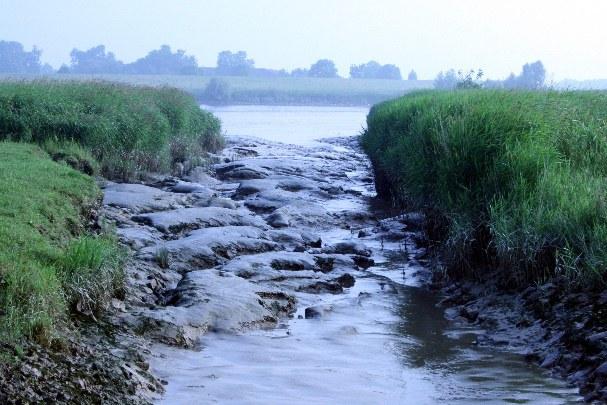 Schlick am Ufer der Unterems